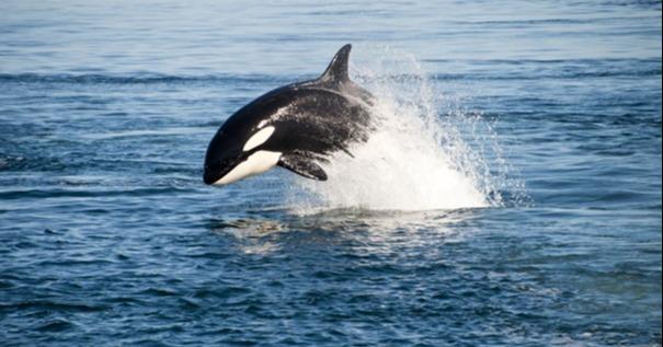 IT-Sicherheit: 5 KMU-Tipps, um sich gegen Whaling zu schützen